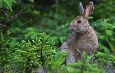 В Николаевской области с 1 апреля в лесах начался «Сезон тишины»